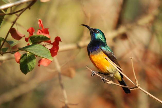 birdwatching in bhutan